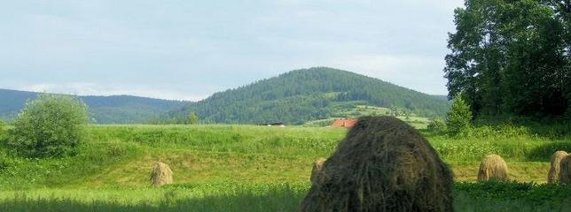 Agrartourismus, Ferienhof