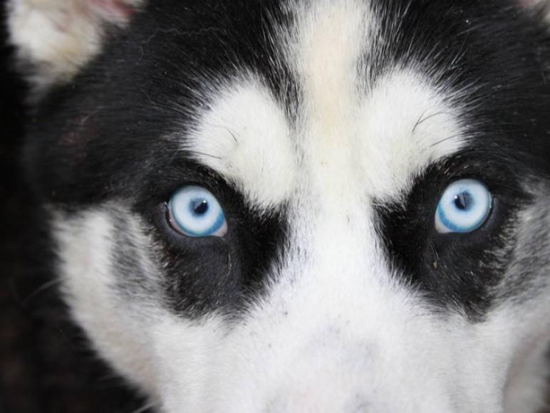 Czy te oczy mogą kłamać?