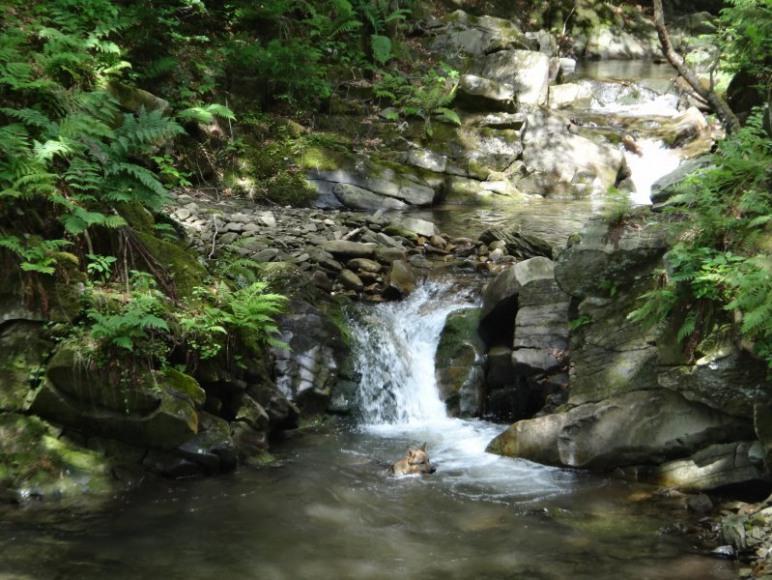 Potok Łopuszanka