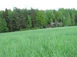 Leśne Zacisze
