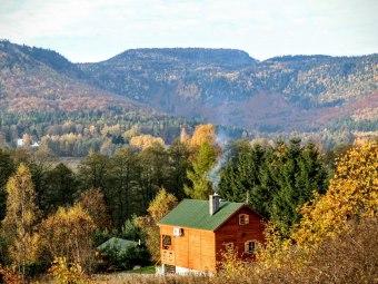 Domki Kolonia Leśna