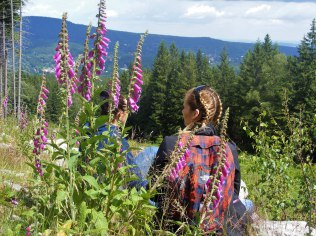 Der Wald an Ihren Fingerspitzen - Sommer in Kleinbayern - Gościniec Mała Bawaria